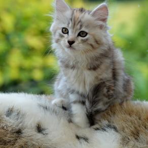 Kattungar på språng!