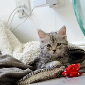 Kattungar - snart redo för flytt