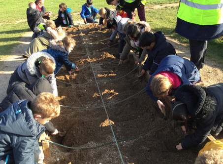 Year 3 visit Butser Farm