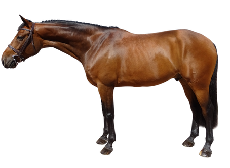 Start September with a New Horse from Pinch Punch: First of the Month