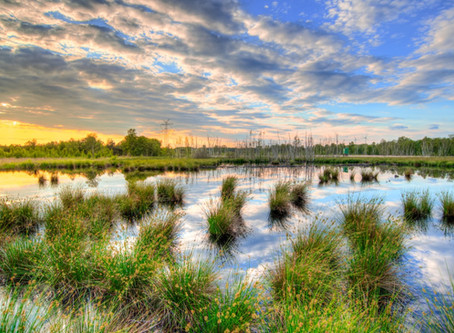 Wetlands Can Protect Against Floods
