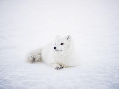 8 AMAZING Winter Animal Facts