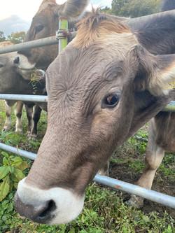 島根県乳牛視察