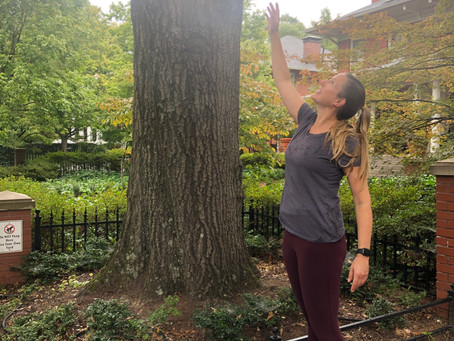 My Favorite Tree(s)