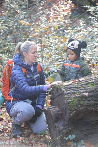 Examining a log