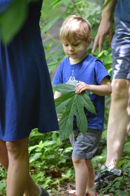 Found my leaf!