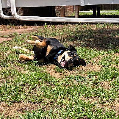 Sweet Snoop enjoying outside time