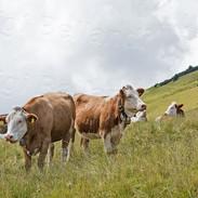 Mucche-Oclini-4398.jpg