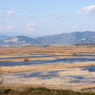 Padule-di-Fucecchio-4224.jpg