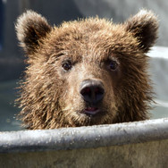 Lake Superior Zoo - Bear Exhibit