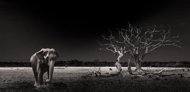 Elephant in Sri Lanka by Jerome Wauthoz