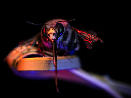 Bee free - Jean-Marc Thirion