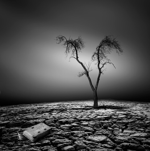 Fin de vie by Charly Lenaerts