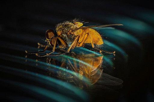 The fly 2 - Jean-Marc Thirion