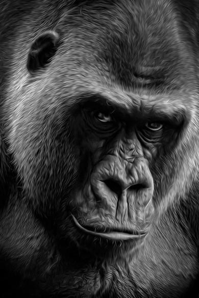 Le Gorille - Thierry De Bleye