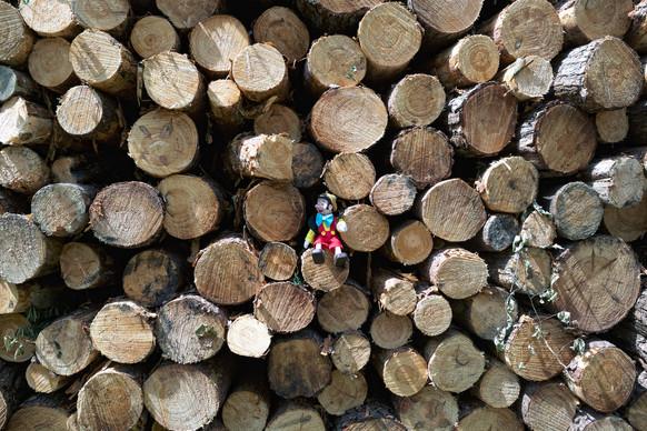 Dans les bois - Nicolas Cretu