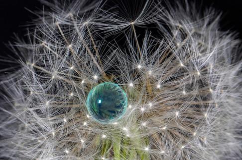 Perle bleue - Thierre De Bleye
