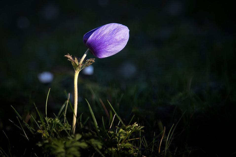 Fleurs de mon jardin by Thierry De Bleye