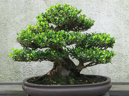 Bonsai 101 and Funky Little Flower Farm — Saving the Family Farm