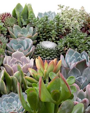 paoli-secret-garden.jpg