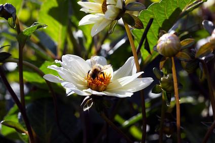Morning bee