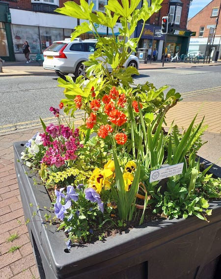 Whitley Bay planters