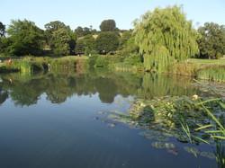 Glastonbury Abbey Grounds
