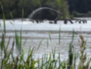 Fabulous Water Beast Llandrindod Lake
