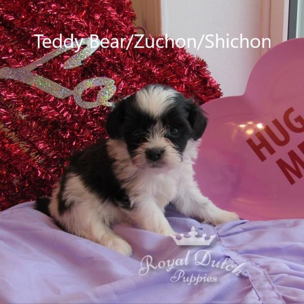 teddy bear_dotty1.JPG