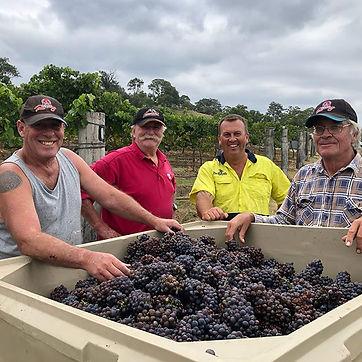 Pinot Grigio 2019 harvest done👍 #pinotg