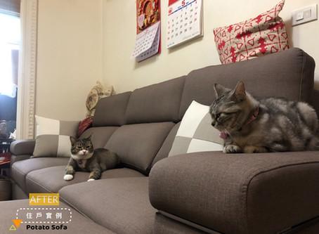 美女新秘_Lena 《BOOM貓抓皮L型沙發》