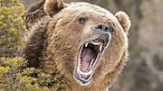 grizzly-bear-spray-1536x864.jpg