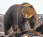 grizzly_edited.jpg