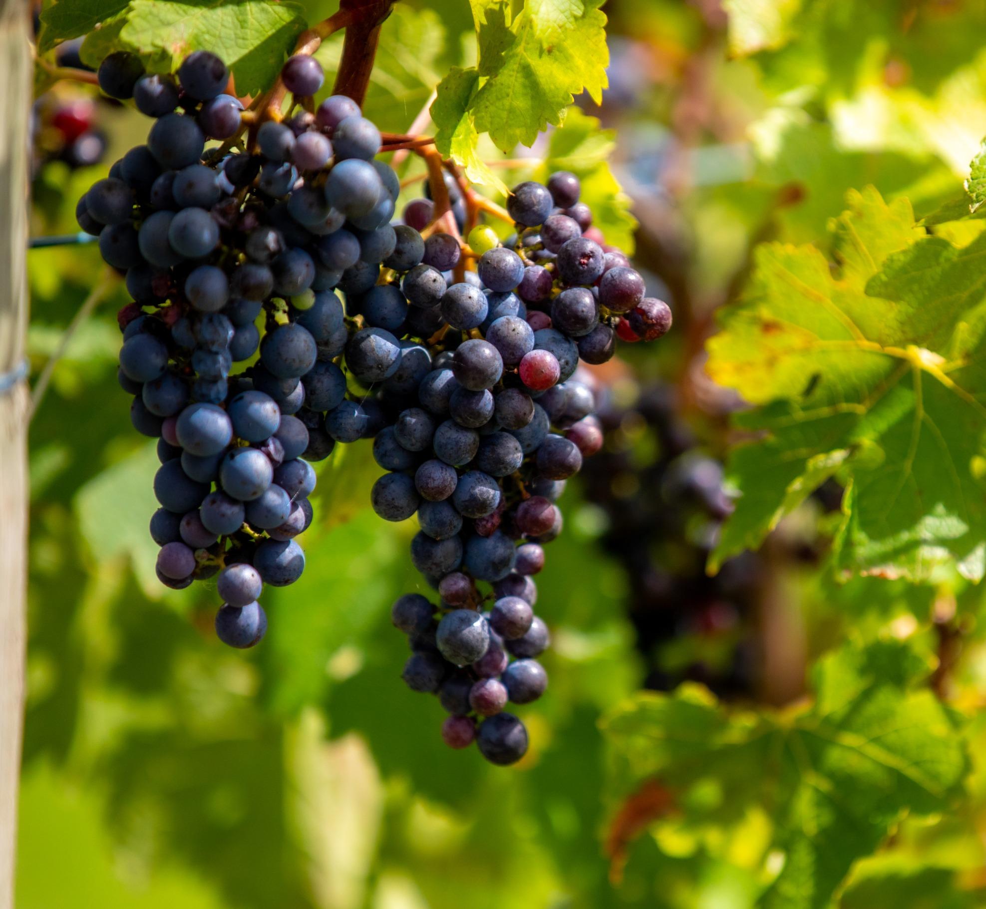 Riverstone Pinot Noir