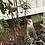 Thumbnail: Aronia melanocarpa (Black chokeberry)