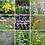 Thumbnail: Pollinator Paradise kit