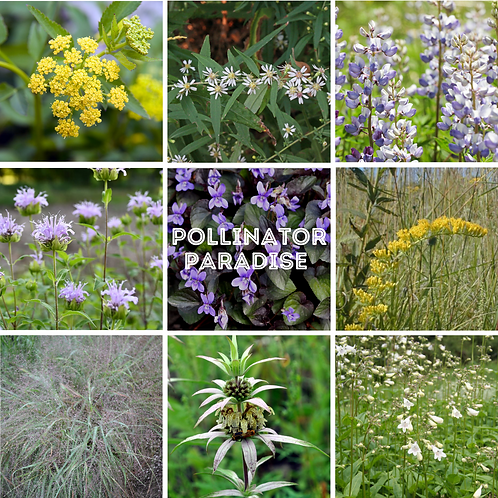 Pollinator Paradise kit