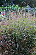 roadside, native plants, landscaping, salt tolerant