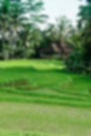 Bali2010_174.jpg