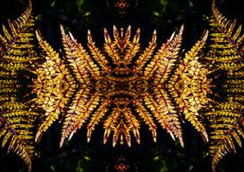 Ferns in Pattern.JPG