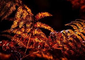 Red Orange Fern.JPG