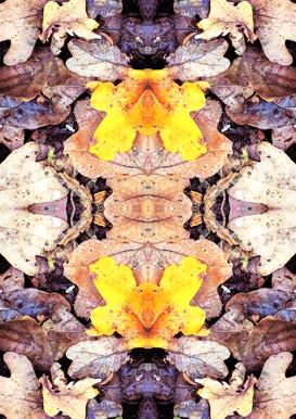 Yellow Leaf Pattern.JPG