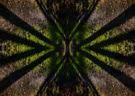 Shadows on Grassy Ground Design.JPG