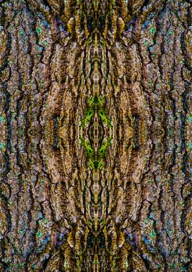 Bark Pattern.JPG