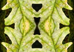 Leaf Pattern.JPG