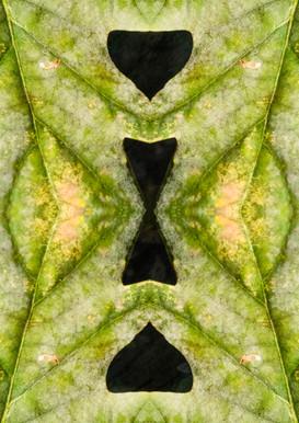 Leaf Pattern Close Up.JPG