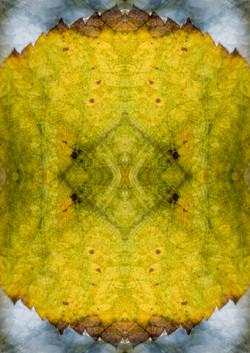 A Pattern Within A Single Leaf.JPG
