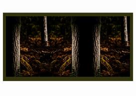 The Dark Woods.JPG