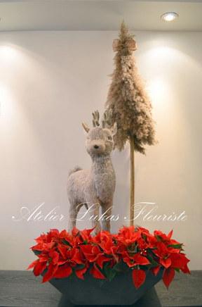 Noël Poinsettia