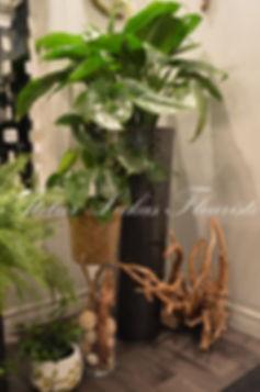 Plantes et potées fleuries Portneuf Québec Atelier Lukas Fleuriste
